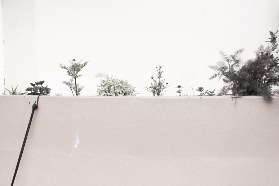 white 006sm.jpg