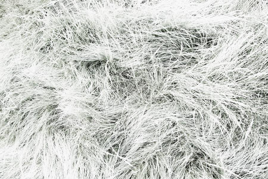 white 036sm.jpg