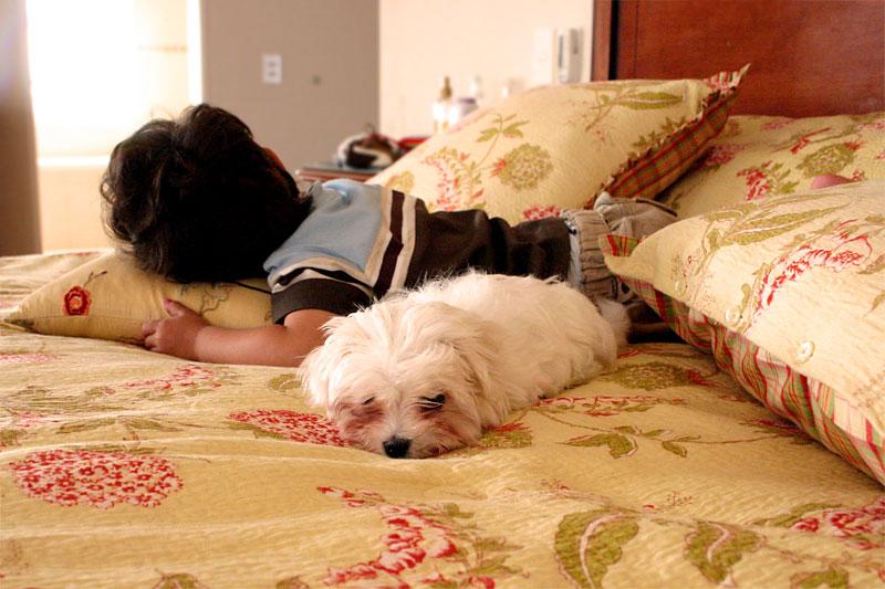 Compartiendo siesta