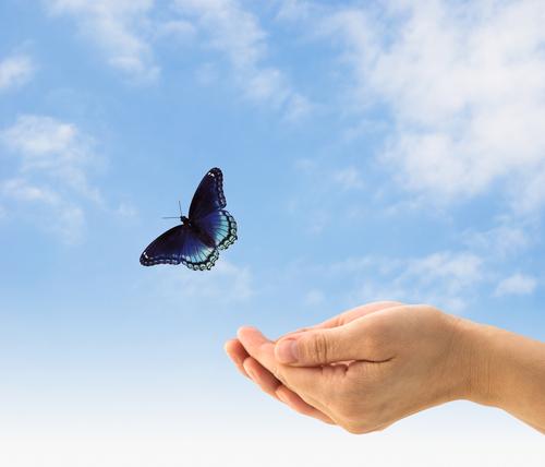 Blue Butterfly Hands.jpg