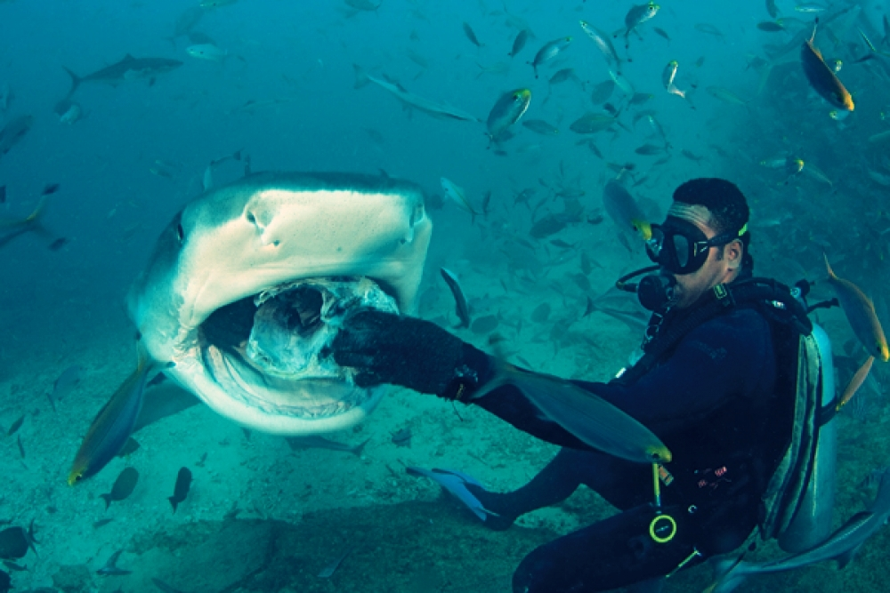 shark scuba.jpg