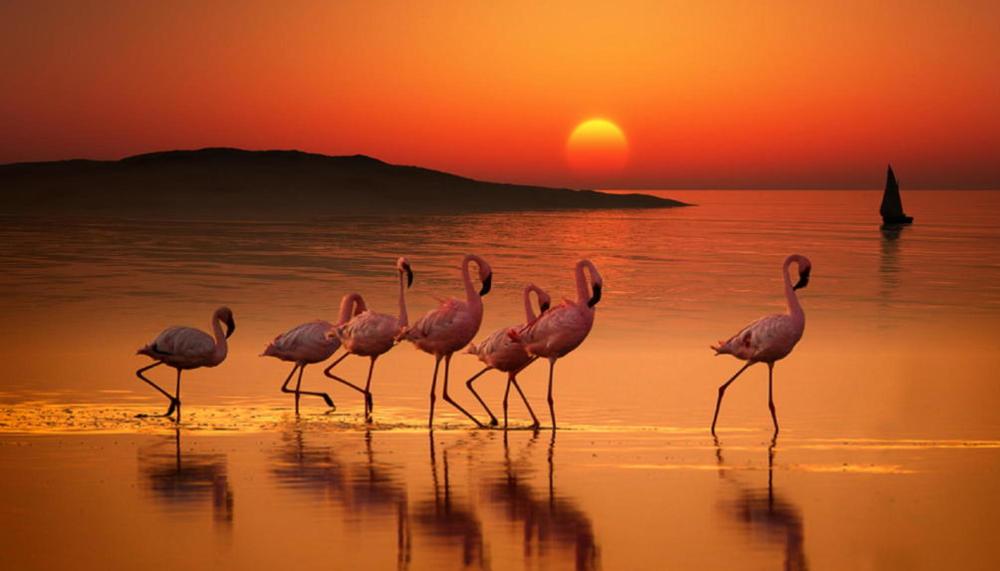 flamingo sunset.jpg