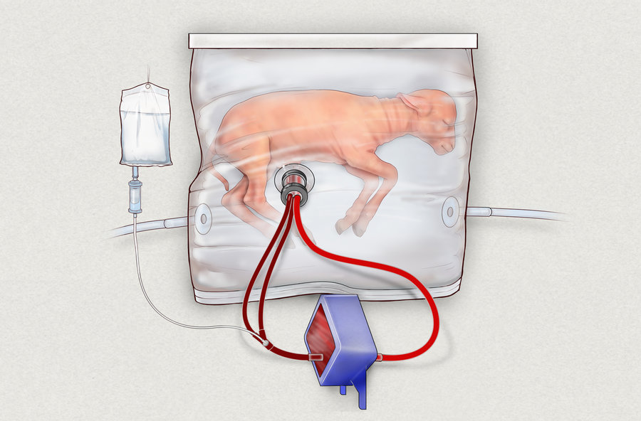 illustration of baby lamb inside artificial womb