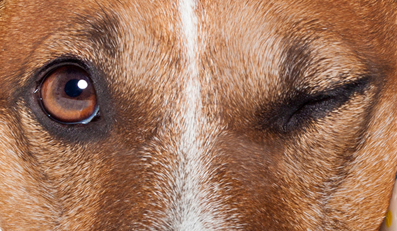 V-dog Pet Products