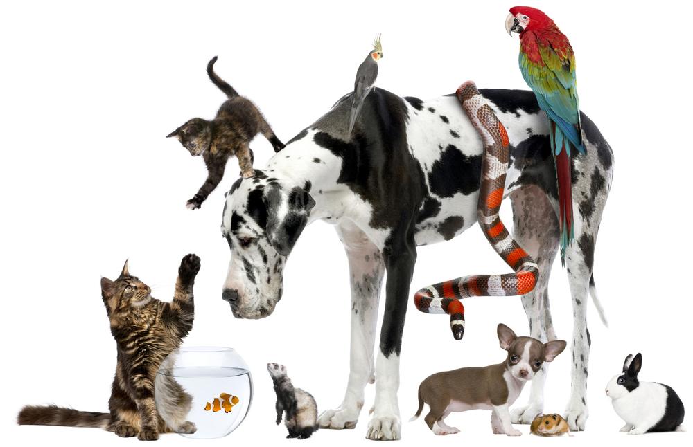 Animal Legal Defense Fund identity design