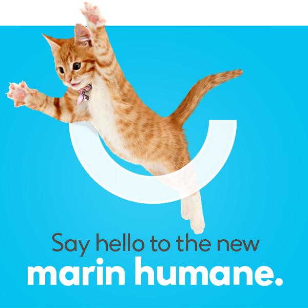 marin humane society brand logo identity nonprofit animal shelter