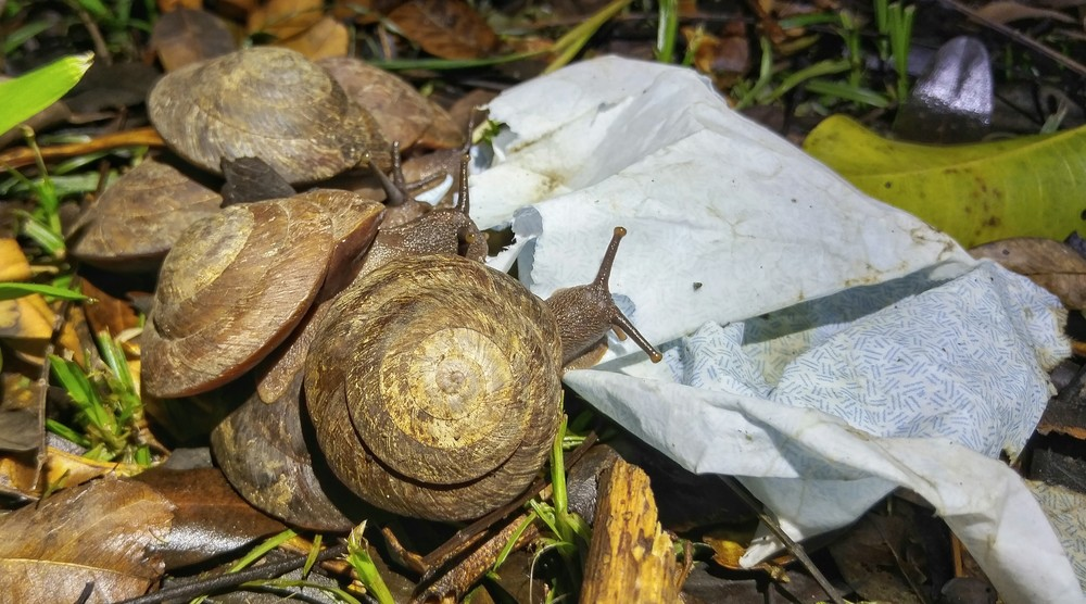 These snails were sharing an envelope for dinner.