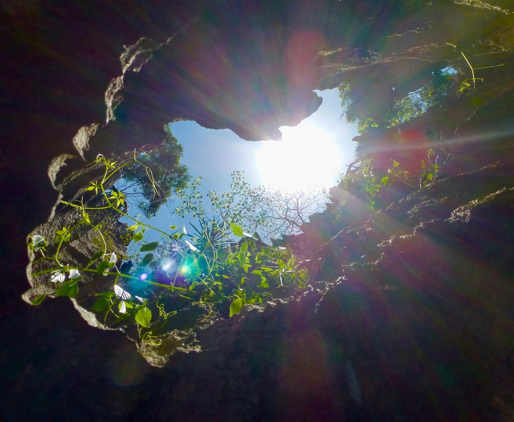 View looking up from cave inside the Tsingy at the forest maving it's way in.