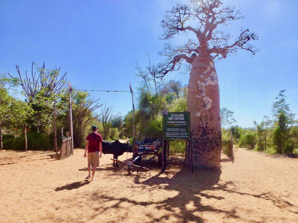Entrance to the tortoise village.