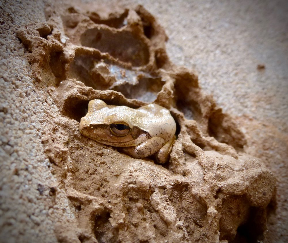 This frog was living in the outhouse.