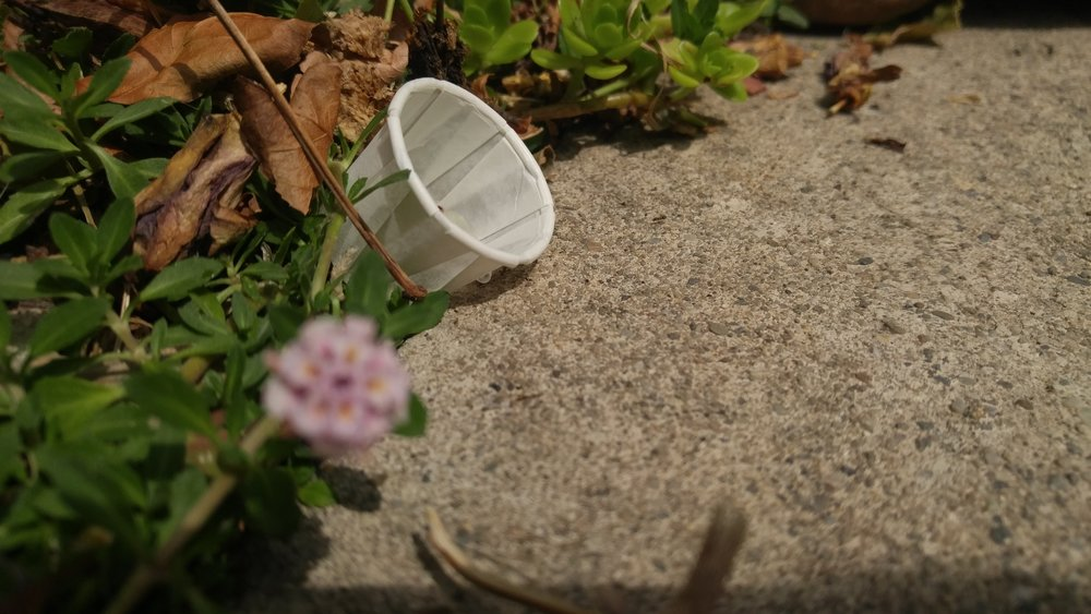 Paper medicine cups or soda bottle lids are good options to hold the ant bait. Place them along the ant trails inside and outside your house.