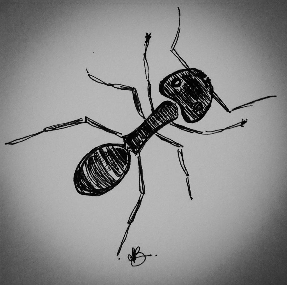 ant.jpg