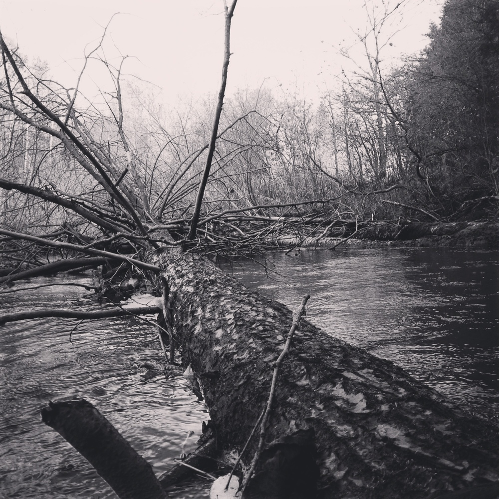 Downed Tree Strainer West Branch Mohawk River