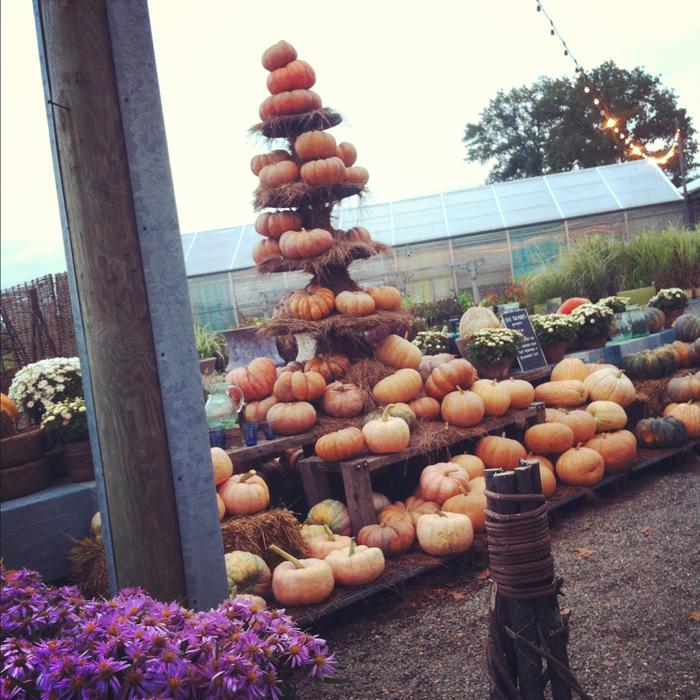 autumn+at+terrain_pumpkin_LowRes+%C2%A9+regina+latella.jpg