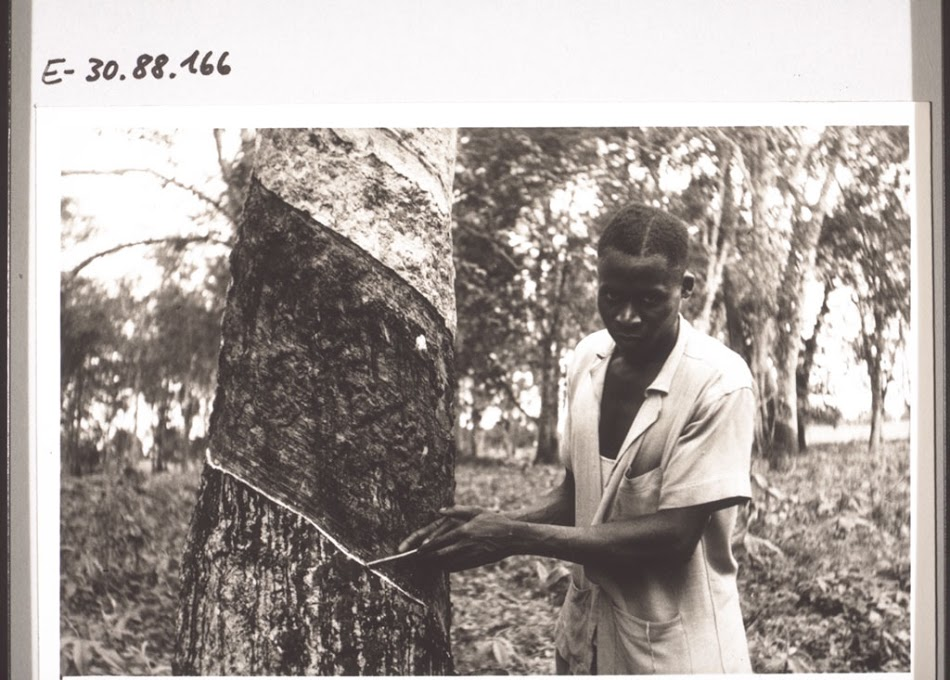 A man tapping rubber from a tree estimated date as early as 1918.