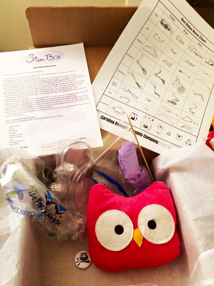 Owl pellet dissection box