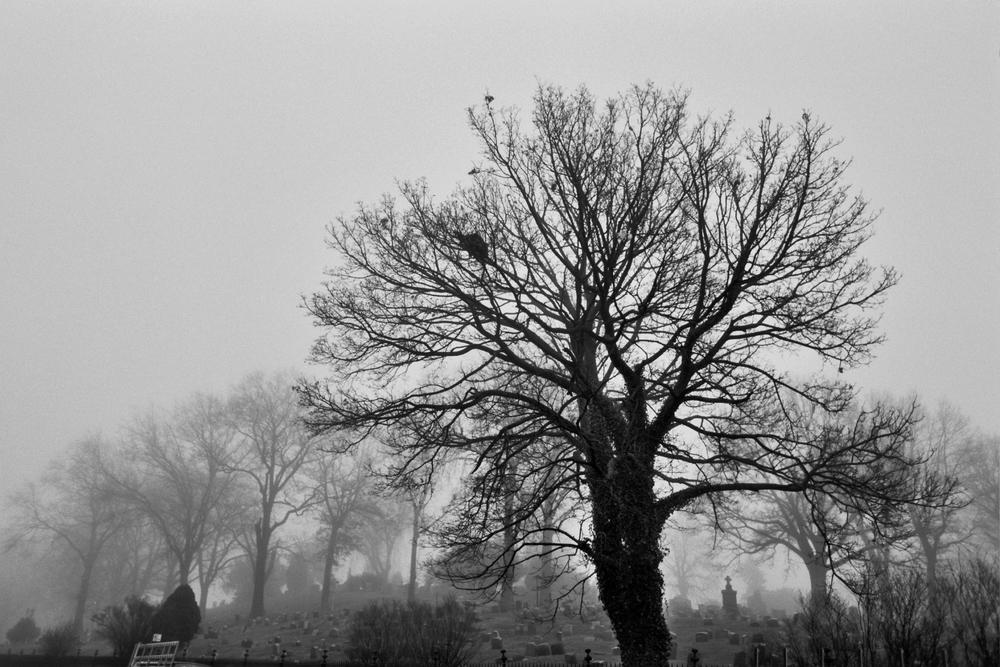 graveyard_tree.jpg