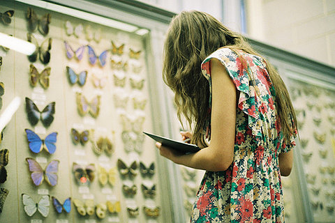 butterfly display.jpg