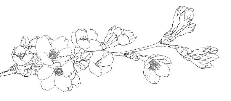 Flower-Coloring-Pages-for-Teens.jpg