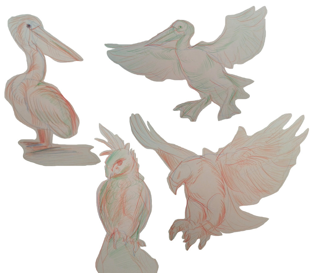 Bird drawings study