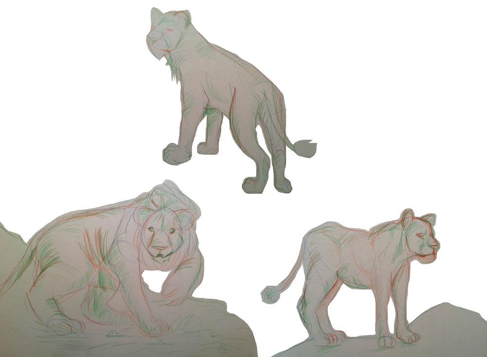 Feline drawings study