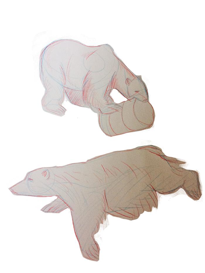 Polar bear life study