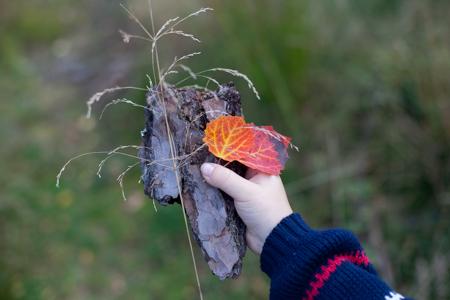 Nature (75 of 91).jpg