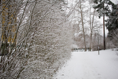 Magical snow!