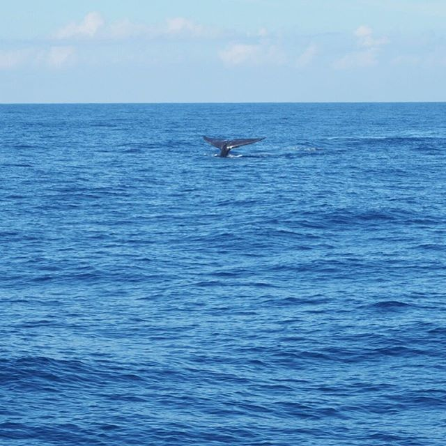 Spent the morning 🐳 watching with @rajaandthewhales ! Spotted blue whales, sperm whales, bryde's whales and spinner dolphins!