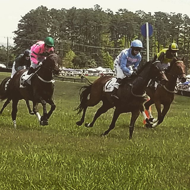 Foxfield Races this weekend were a blast!  #stellar #remodeling #charlottesville #va #uva #virginia #horsesofinstagram #races #horses #saturday #sunny #renovation #stellar_gallery