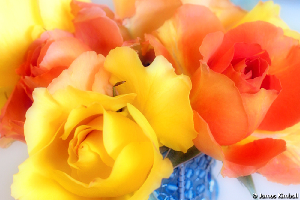 Colorful Roses.jpg