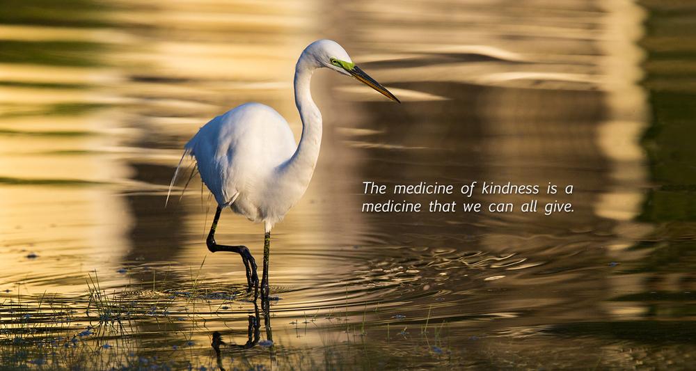 white bird w text.jpg