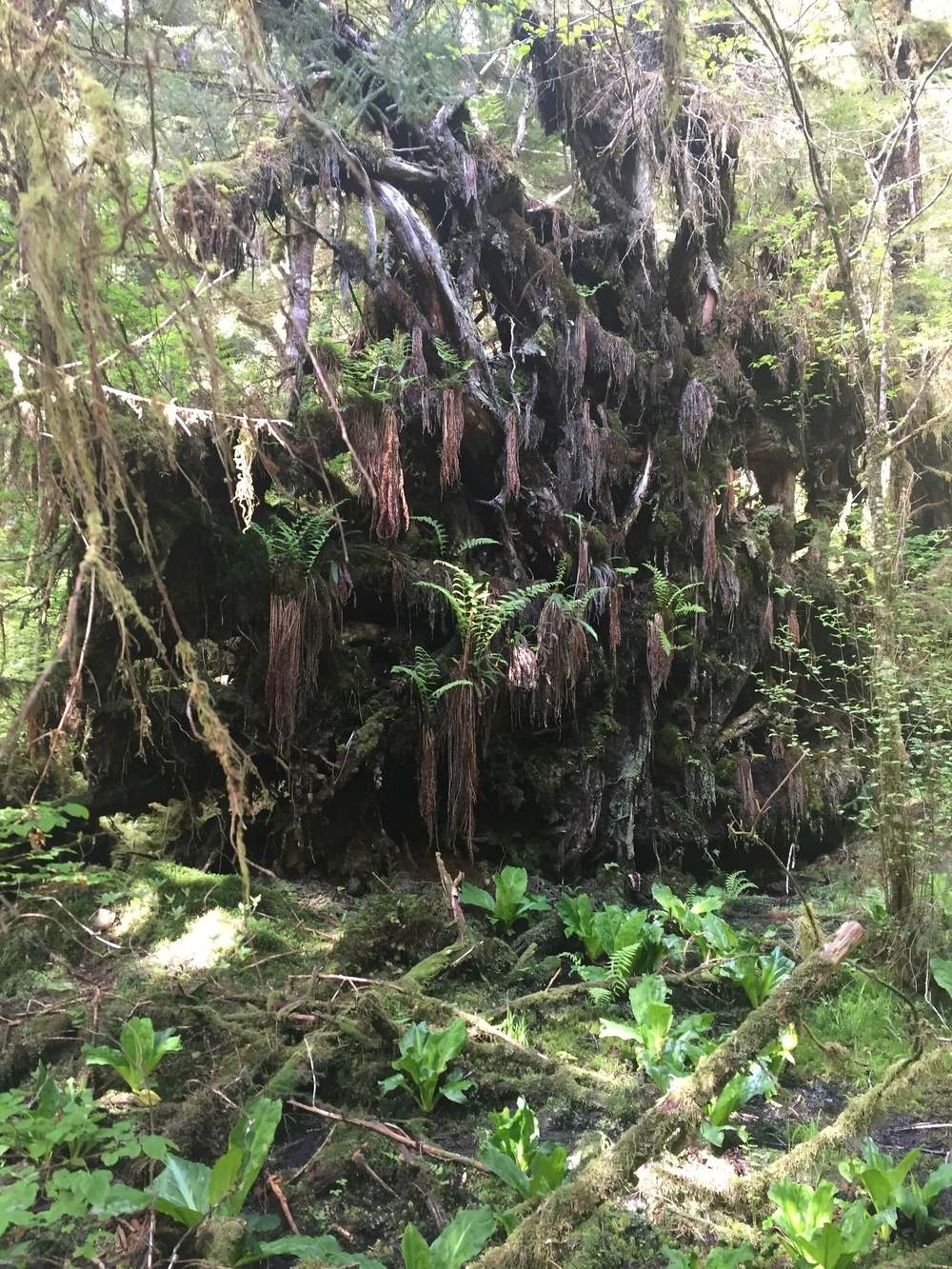 Crazy root systems everywhere!