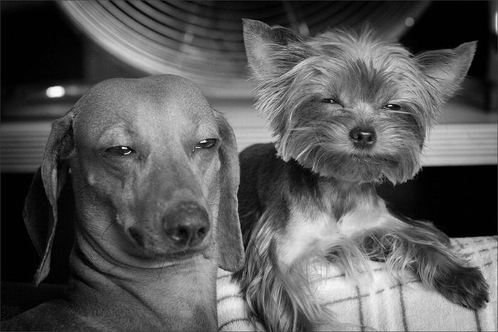 In thanks for you spending time reading this page, here are some very, um, happy dogs.