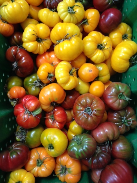 Heirloom Tomatoes by Woodland Gardens Organic Farm