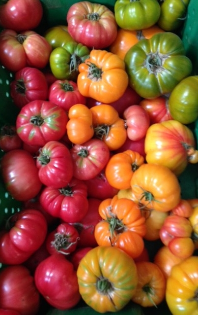 Woodland Garden Organics Farm | Heirloom Tomatoes