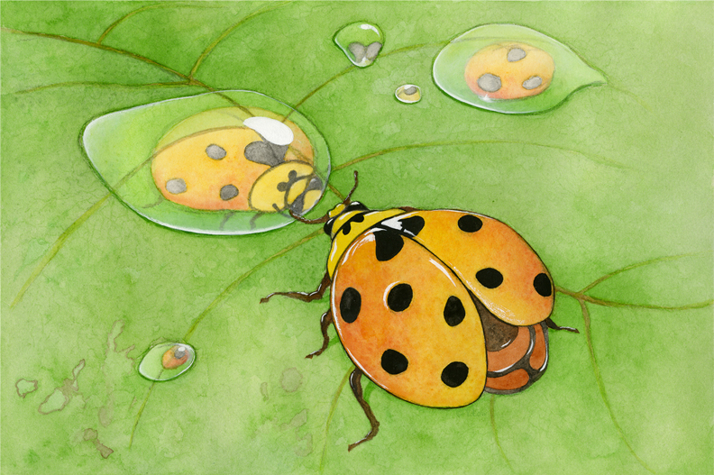 Reflection Ladybird.jpg