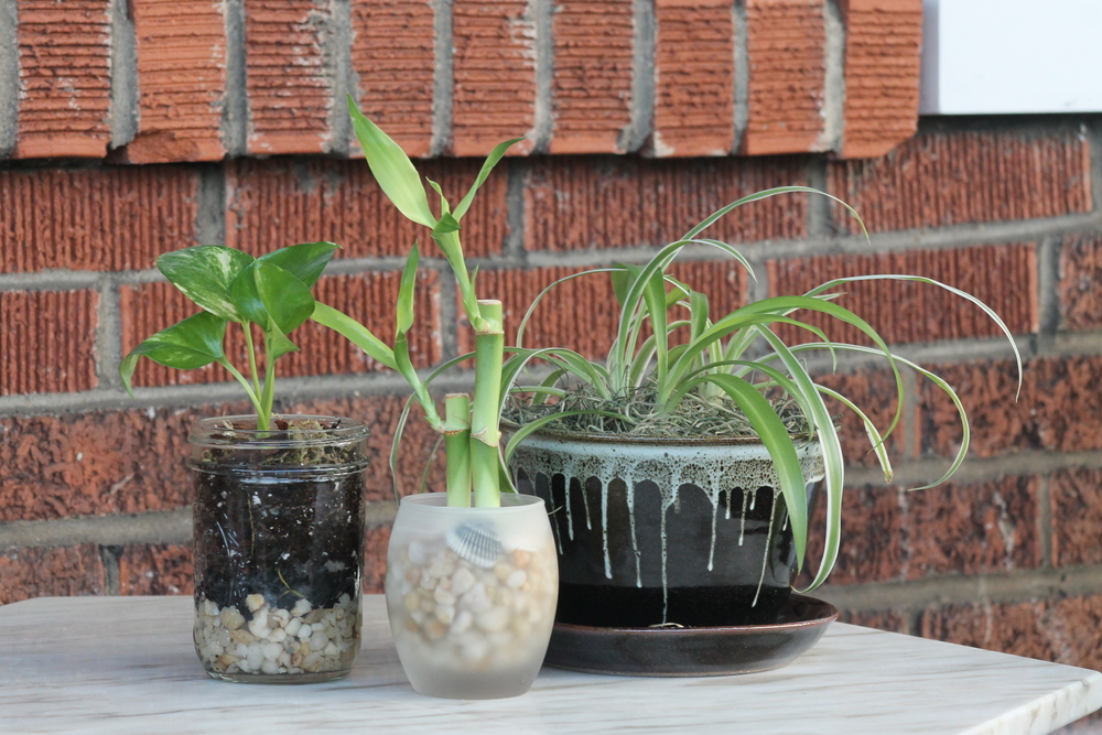 our terrariums are designed with young plants that will thrive in their containers for many years to come