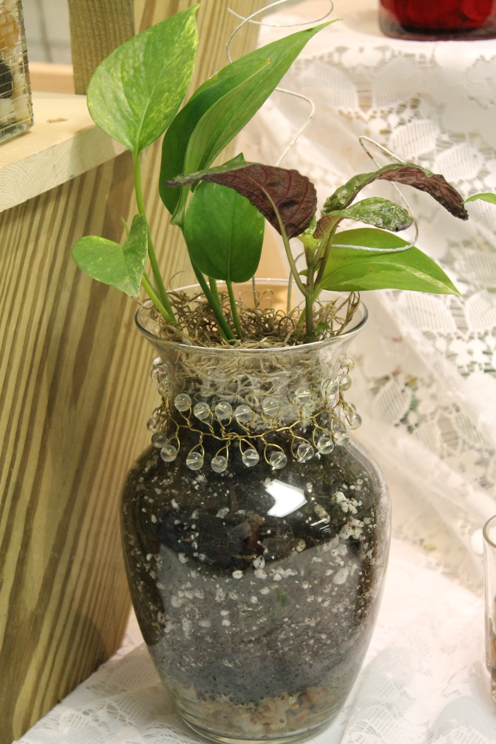 houseplants can improve indoor air quality