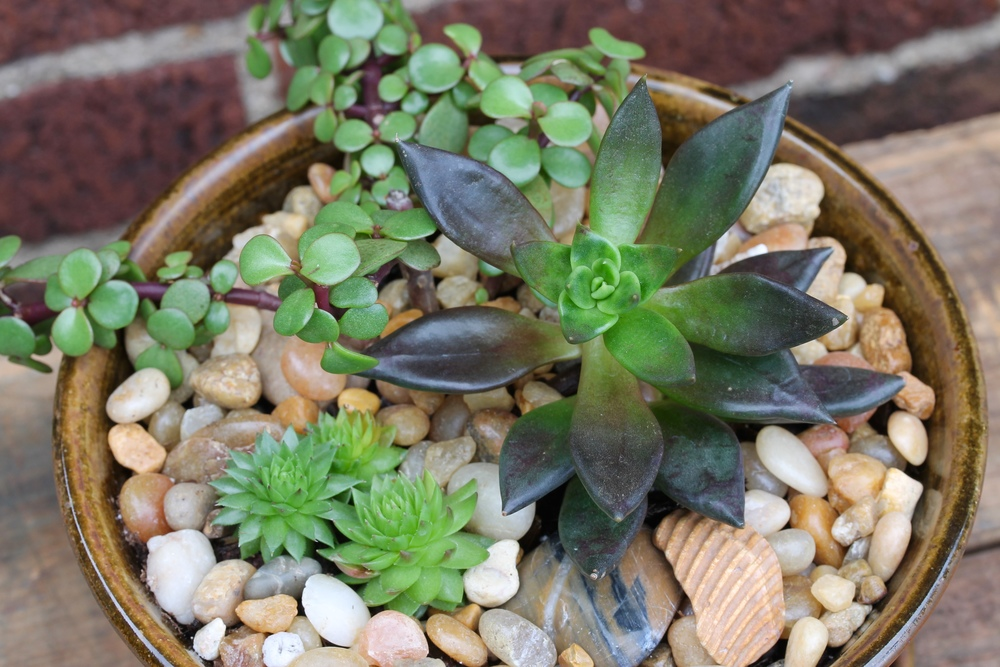 Succulent arrangement in hand-thrown planter, available at Robin's Nest.