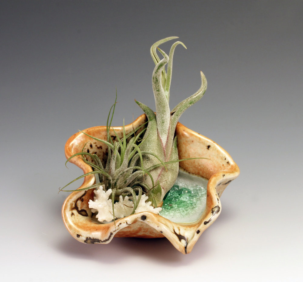 airplant_dish_greenglass.jpg