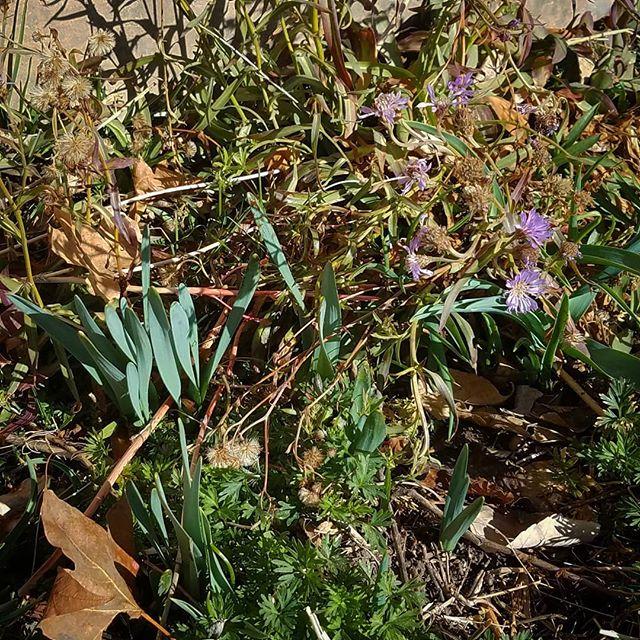 #spring is on the way. #flower #utah #greenstuff