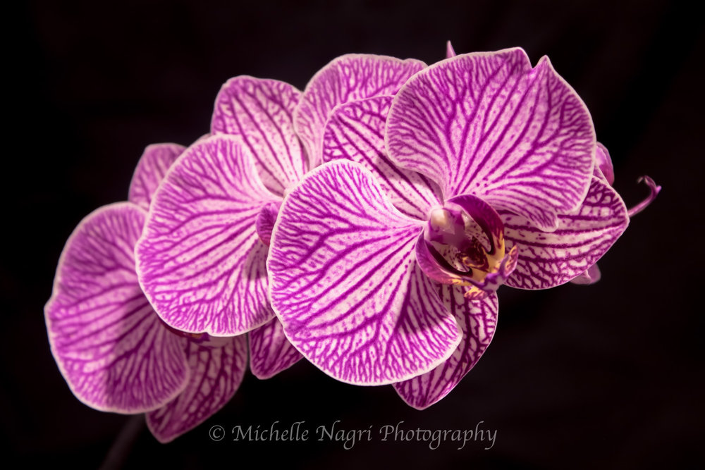 Orchid in Three