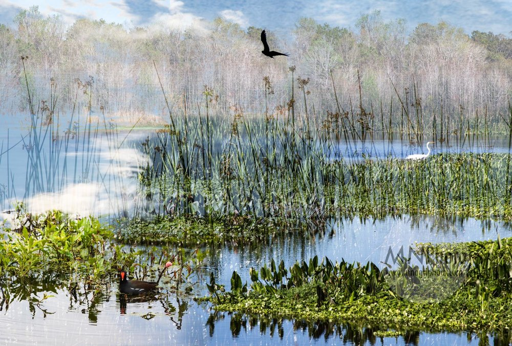 Sweetwater Wetlands , 2019