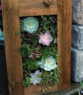 DIY-Living-wall-sedum-succulent-planter.jpg