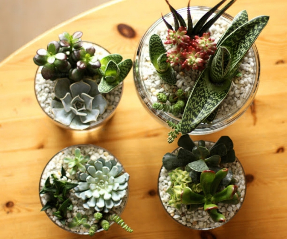 DIY_succulents_07.jpg