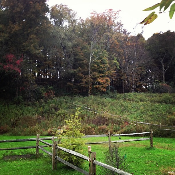 Fall in upstate NY… Just outside of Studio 44. (Taken with  Instagram  at Millbrook, NY)