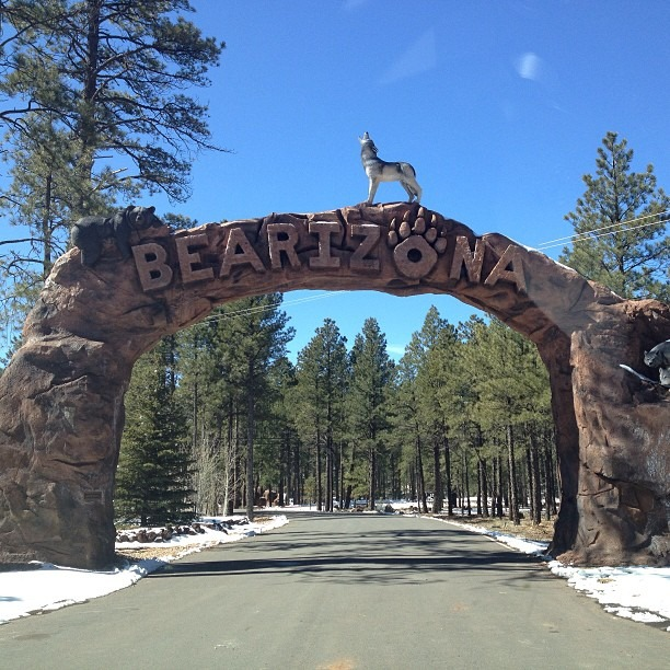 BEARIZONA!?!? Fuck yes!!! #detour #bearizona #bears #wolves #bison #ohmy (at Bearizona)