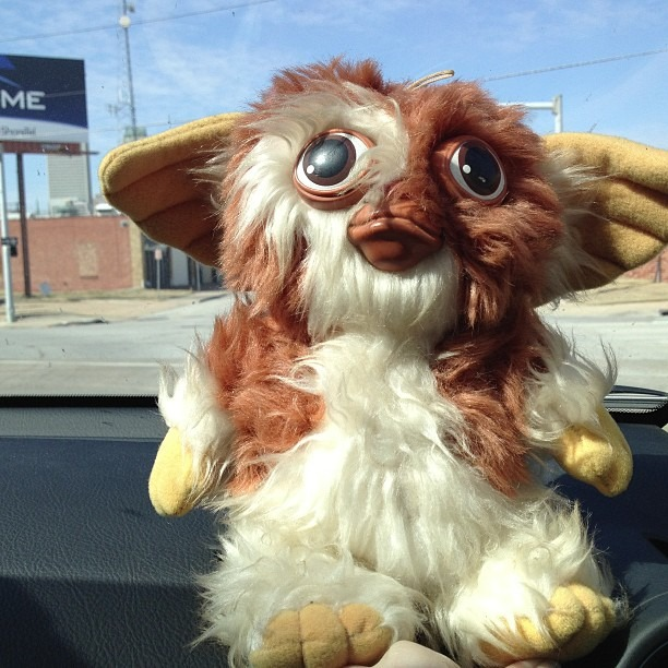 We picked up a #hitchhiker ! #gizmo #gremlins #roadtrip #newfriend #80s