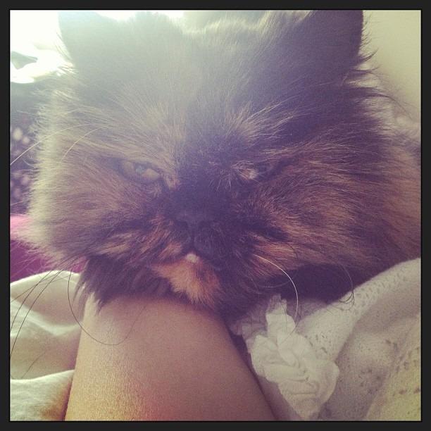 I love Annie. #GetWellSoon #catlove